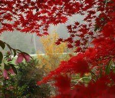 """""""Duke Gardens is vibrant in every season"""" Check out the gardens@duke blog written by Duke Gardens staff."""