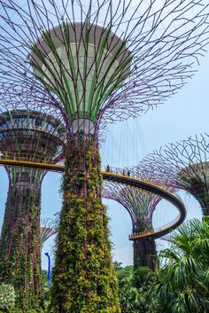 The Supertrees at the Gardens by the Bay in Singapore