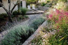 Fir Tree, Landscape Architecture, Outdoor Living, Garden Design, Succulents, Plants, Image, Inspiration, Google