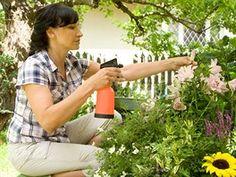Devět tipů, jak na zahradě zatočit bez chemie s chorobami a škůdci - iDNES.cz Flora, Garden Ideas, Chemistry, Plants, Landscaping Ideas, Backyard Ideas
