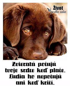Leggi l'articolo per saperne di più 🐶 Dog Training Videos, Best Dog Training, Mundo Animal, My Animal, Cute Funny Animals, Cute Dogs, Chesapeake Bay Retriever, Sweet Dogs, Dog Muzzle