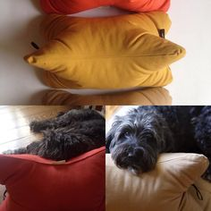 Pera got her #pattifurry cushion :) #dogcushion #hunde #ilovemydog #lovedogs #dogsinberlin #handmade #handgemacht #instadog #dogsofinstagram #instagood #love #dogaccessories #interiør #rescuedog #rescuedogs