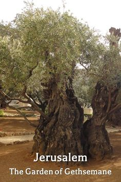 """The biblical Garden of Gethsemane is located on the slope of Mount Olives, in Jerusalem 