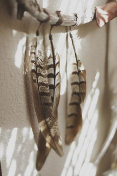 feathers hanging on branch