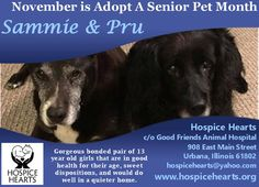 November is Adopt A Senior Pet Month! SAMMIE & PRU are available for adoption from Hospice Hearts URBANA, IL. www.hospicehearts.org