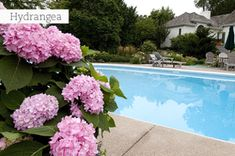5 Plants for Poolside Planting Are you having trouble trying to find the right plants to go around your backyard pool? Try some of these varieties! They will live in harmony with your pool. Online Plant Nursery, Cape Gooseberry, Buy Plants Online, Planting Shrubs, Go Around, Small Space Gardening, Container Gardening, Perennials, Modern