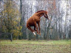 Взлет разрешен…. - Избранные фотографии - фотографии - equestrian.ru