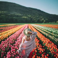 spring time tulips in british columbia.🌷 through spring time tulips in british columbia.🌷 through Bryan Chandler spring time tulips in british columbia.🌷 through Bryan Chandler Photography Poses, Landscape Photography, Travel Photography, Digital Photography, Beginner Photography, Spring Photography, Pinterest Photography, Indoor Photography, Happy Photography