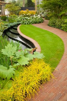 Beautiful garden design with curvaceous lines and plants including wild ginger and pretty Rhododendron macabeanum. . Designed by Balston Agius
