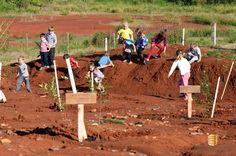 Reflorestamento realizado dia 9 de junho 2015.