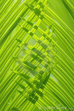 Green Leaves http://calgary.isgreen.ca/living/kids/natural-ways-cleanse-kids/