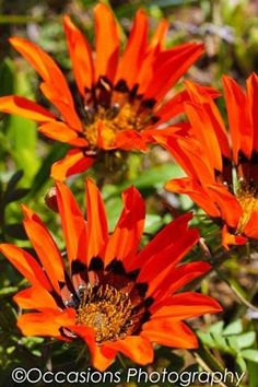 Namaqualand flowers Pretoria, West Coast, South Africa, Heart, Places, Flowers, Image, Royal Icing Flowers, Flower