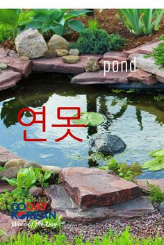 Can you use (pond) in a sentence? Write your sentence in the comments below! #90DayKorean #LearnKoreanFast #KoreanLanguage