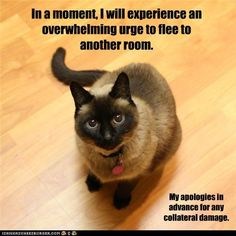 Ok, this is so my cats!!