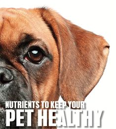 Here are some tips on how to look after your furry companions and keep in them in the best of health. Read more. Look After Yourself, How To Better Yourself, Becoming A Better You, Natural Health, Your Pet, Pets, Healthy, Health, Animals And Pets