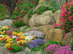 Kwiaty na skalniak długo kwitnące