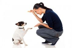 13 Tips From the Top Dog Trainers   WOOFipedia by The American Kennel Club