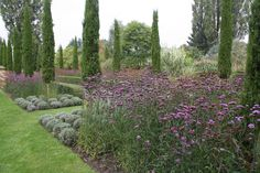 Garden Peter Janke 9/2014 Clipped lavender balls, tall stands of Verbena bonariensis with cypresses
