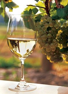 Chardonnay:  This popular, adaptable white wine grape can be grown in just about every wine-producing country in the world. It is the grape behind the famed dry, white burgundies of France and one of the principal varietals in champagne. Typically, chardonnay is an oaked wine with medium-high acidity and a fuller body. It's flavors and aromas can range from toasty and vanilla (from the oak) to tropical fruits to slightly earthy.   Food Pairing: Fatty fishes and rich cream sauces.