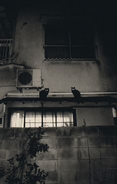 Cats in the Night