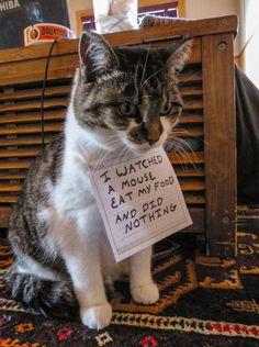 """El cartel de la vergüenza.  """"Vi un ratón comerse mi comida y no hice nada."""""""
