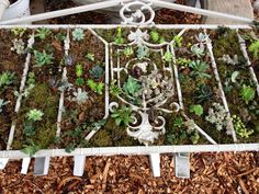 Succulent Bed.  Old metal bed frame, moss & succulents.