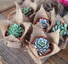 "Succulent Favors Assorted Collection. 10 Premium Succulents in 2"" pots Wrapped in Burlap - La Fleur Succulente by LaFleurSucculente on Etsy https://www.etsy.com/listing/230180886/succulent-favors-assorted-collection-10"