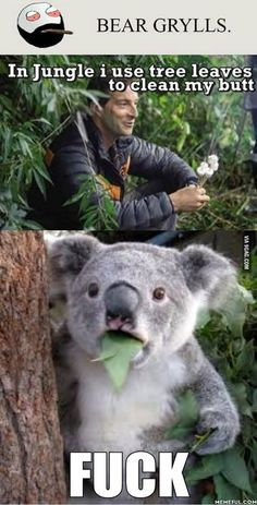 Funny Memes Of The Day 33 Pics - Koala Funny - Funny Memes Of The Day 33 Pics The post Funny Memes Of The Day 33 Pics appeared first on Gag Dad. Funny Koala, Cute Funny Animals, Funny Cute, Hilarious, Koala Meme, Funny Shit, Stupid Funny Memes, Funny Relatable Memes, Animal Jokes