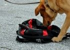 Cutter working a parcel search in a busy parking lot.