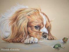 Cavalier King Charles Spaniel, dog portrait.  Original pastel drawing by CanisArtStudio. #dog #cavalier #spaniel #portrait #drawing #petportraits #CanisArtStudio