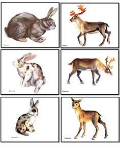 Animal Pictures For Kids, Creative Activities For Kids, Montessori Materials, Study Inspiration, Mother Earth, Kangaroo, Kindergarten, Creatures, Illustration