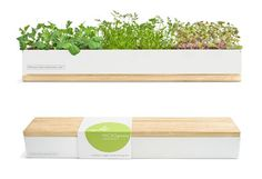 http://inhabitat.com/greenholidaygiftguide/green-gifts-under-50/micro-greens-kit/