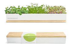http://inhabitat.com/greenholidaygiftguide/green-gifts-under-50/micro-greens-kit/