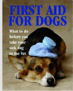 How to care for your sick doggie before going to the vet #mustknow #pet #care