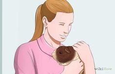 Como Alimentar um Porquinho da Índia: 13 Passos