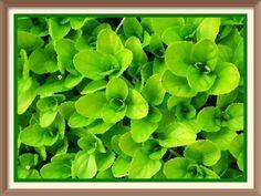 Green Paintings, Herbs, Instagram, Art, Art Background, Kunst, Herb, Performing Arts, Art Education Resources