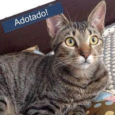 Esse é o Tigre, mora em São Paulo. Esta castrado, vermifugado e tem apenas 4 meses. Visite nossa página e o leve para casa!  http://www.amigonaosecompra.com.br/pets/4809-tigre-gato-medio-macho-filhote-docil-brincalhao-sociavel-carente-calmo-gatos-cachorros-criancas-desconhecidos-casa-com-quintal-apartamento-castrado-vermifugado-sp-sao-paulo