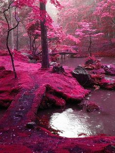 Moss Garden, Saiho-Ji Temple , Kyoto, Japan.  Love that pink!