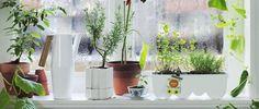 Junte-se ao movimento de jardinagem urbana!