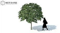 3D Model of Low poly 3d tree (059)
