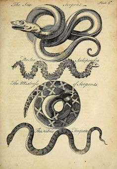 Charles Owen, An essay towards a natural history of serpents, 1742. Complete work at the Biodiversity Heritage Library.