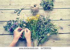 Freshly harvested herbs/toned photo - stock photo