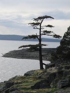 Powell River, B.C. Canada