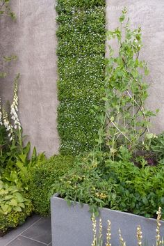 Vertical garden -- how cool! This tall rectangle of planting looks like sweet woodruff - super happy in shade and a fast runner (also edible and heavily scented so good by a patio)