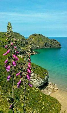 Bossiney-Cornwall- Beautiful-The Magic of Cornwall. Cornwall England, London England, Santa Cruz Camping, Camping Cornwall, British Beaches, Holidays In Cornwall, Camping Lights, Landscape Photos, Beautiful Beaches