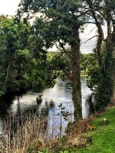 River that runs through Cong, Ireland. #river #trees #greenery #greeneryscenery #nature #stones #Ireland #CountyMayo #Cong #history #travel