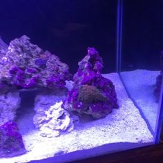 #saltwatertank #fish #crab #snail #coral #90gallon His hobbie I just like to pick out pretty corals... I want a dam seahorse!!!