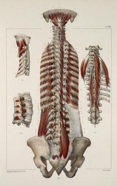 Plates from the book: Traité complet de l'anatomie de l'homme                                                                        ...
