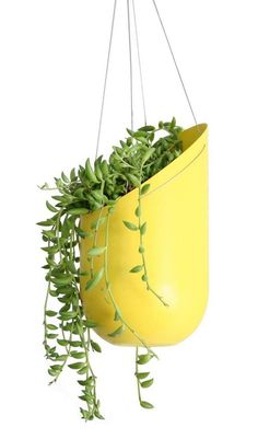 Elevate your plants! Great for small delicate succulents, cactus, herbs, or lettuce. Each pot features holes for drainage and powder coated spun aluminum, making the planters ideal for any outdoor env Decorative Planters, Hanging Planters, Garden Planters, Hanging Basket, Plastic Bottle Planter, Plastic Bottles, Soda Bottles, Wine Bottles, Glass Bottles