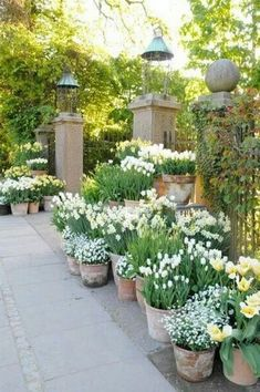 You do not necessarily need to have a cottage just to have a cottage-inspired garden decor. With a help of a few cottage garden decor ideas, you can style Garden Cottage, Garden Pots, Potted Garden, Lush Garden, Herb Garden, Amazing Gardens, Beautiful Gardens, Garden Wallpaper, Jardin Decor
